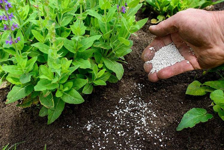 Bón phân định kỳ bảo dưỡng mảng xanh