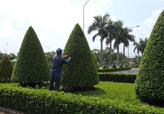 Cắt cây trên mảng xanh