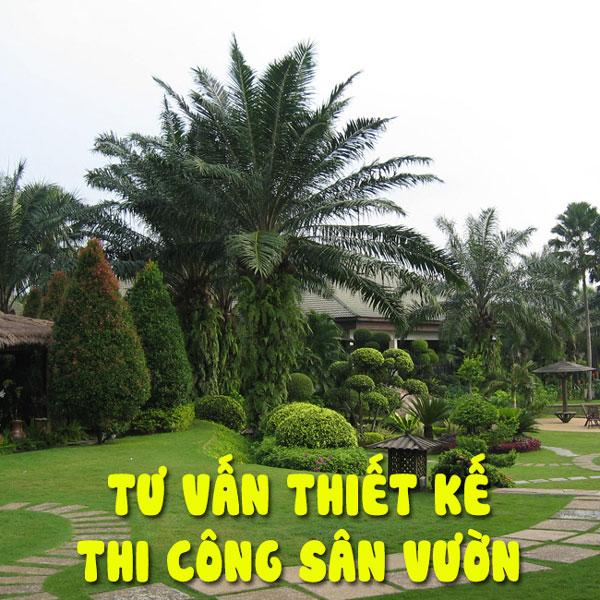 Bố trí cây xanh sân vườn