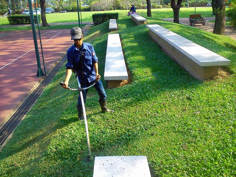 Phát thảm cỏ - bảo dưỡng thảm cỏ mảng xanh