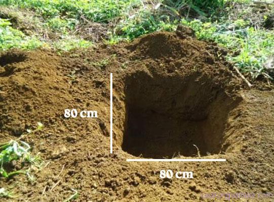 Công tác đào hố trồng